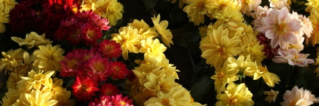 Zapraszamy na zakupy… rośliny rabatowe, materiał szkółkarski…