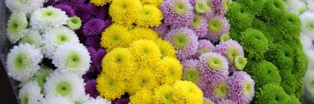 Zapraszamy na zakupy!!! Kwiaty, znicze…