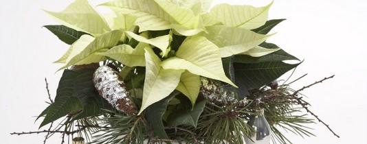 Roślina, która łagodzi obyczaje…