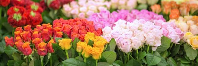 WIĄZANKA KAMELIOWA – warsztaty florystyczne