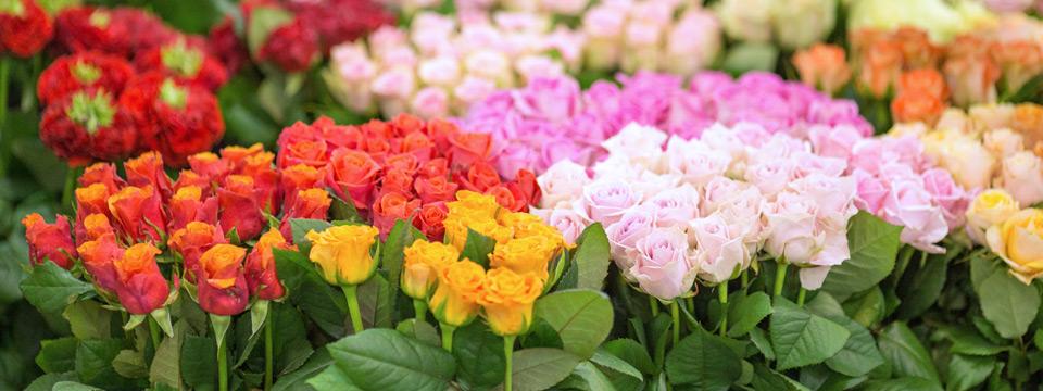 Kwiaty, dodatki – szeroka oferta produktów