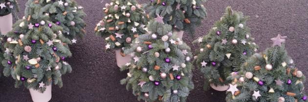 Florystyka świąteczna – 14 grudnia 2016 r. – warsztaty