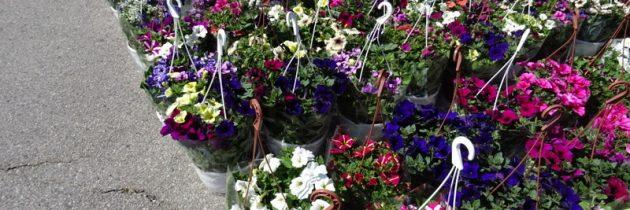 Jak pracuje rynek hurtowy w okresie świąt majowych…