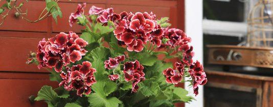 Zachwycająca różnorodność kwiatów …