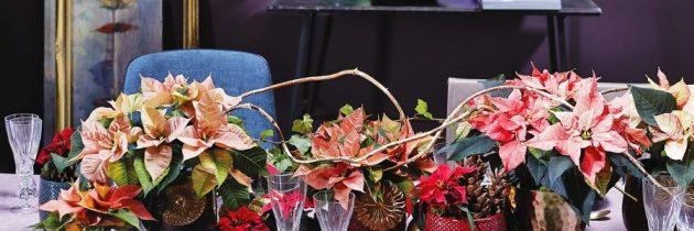 O świątecznych dekoracjach stołu …
