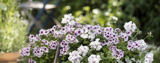 Zachwycająca różnorodność kwiatów