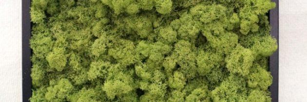 """Fotorelacja """"roślinne obrazy – zielone ścianki"""""""