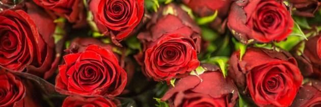 Już 14 lutego Walentynki !