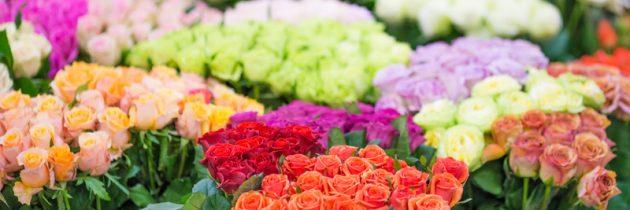 Zapraszamy na zakupy! Kwiaty cięte i doniczkowe…