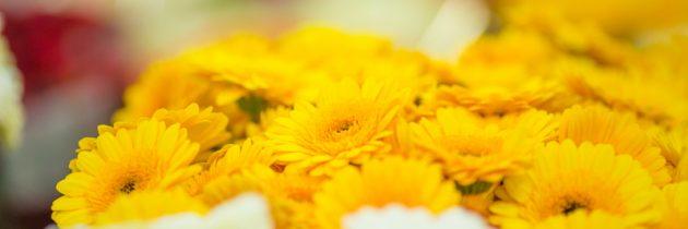 Kwiaty cięte i doniczkowe…
