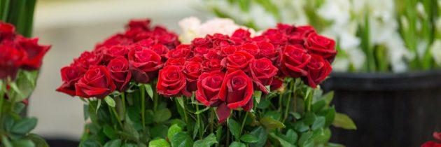 Walentynki już za kilka dni 💕