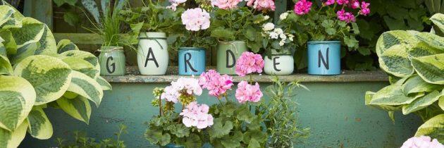 Wyraź to kwiatami! Pomysły na kwiatowe prezenty z pelargoniami.