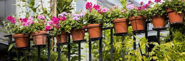 Małe, miejskie przestrzenie. Pomysły DIY z wykorzystaniem pelargonii i innych roślin w miejskim raju.